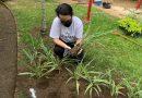 Videoaula ensina noções de jardinagem em casa